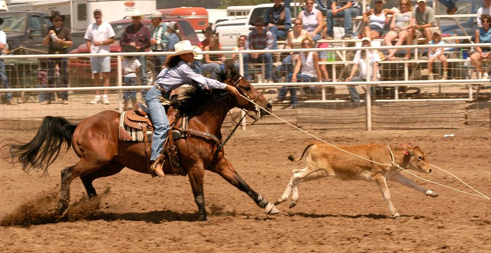 Calf roping in a rodeo